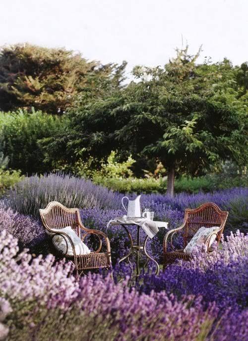 English Garden 12