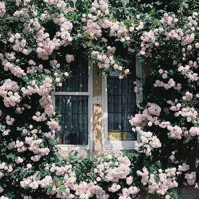 English Garden 9